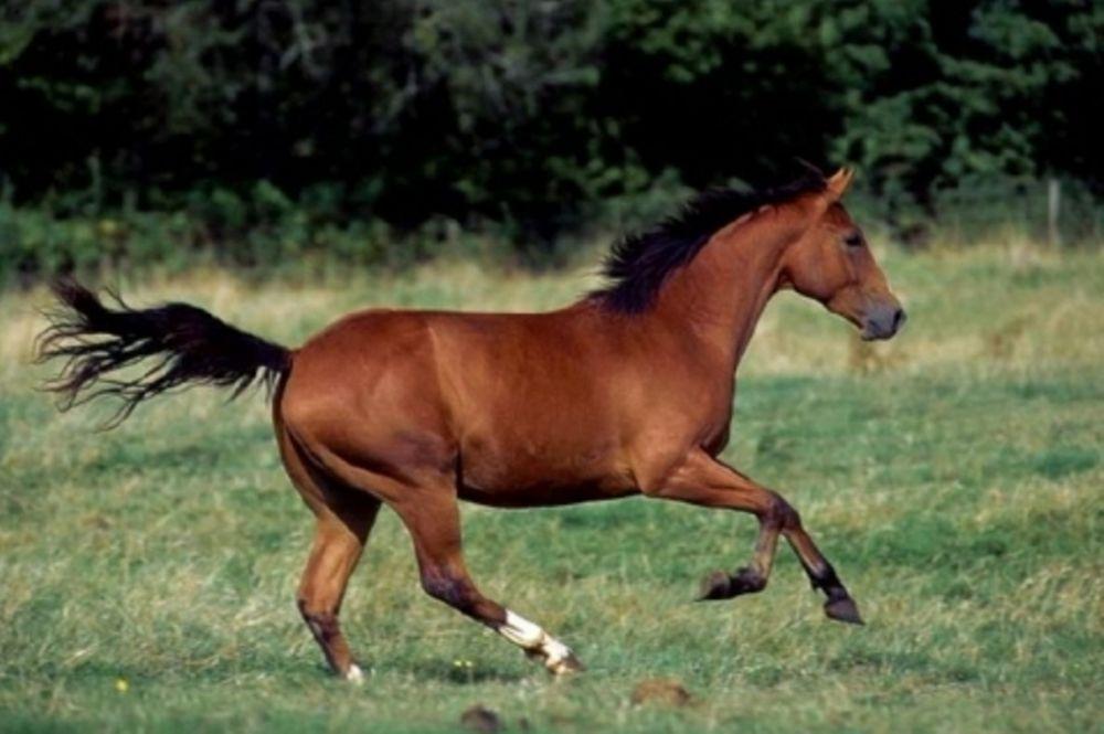 Αφηνιασμένο άλογο συγκρούστηκε με Ι.Χ.