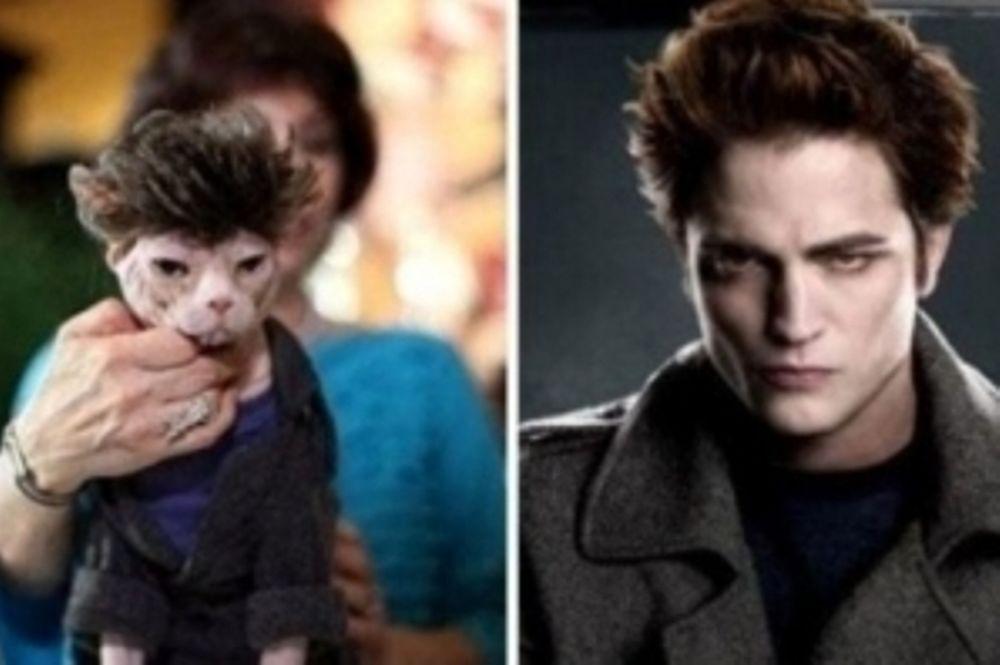 Διάσημοι που μοιάζουν με γάτες