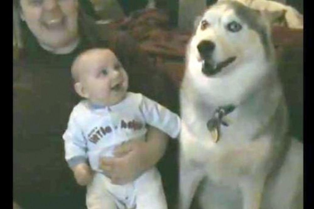 Το Χάσκι «μιλάει» και το μωρό γελάει (video)