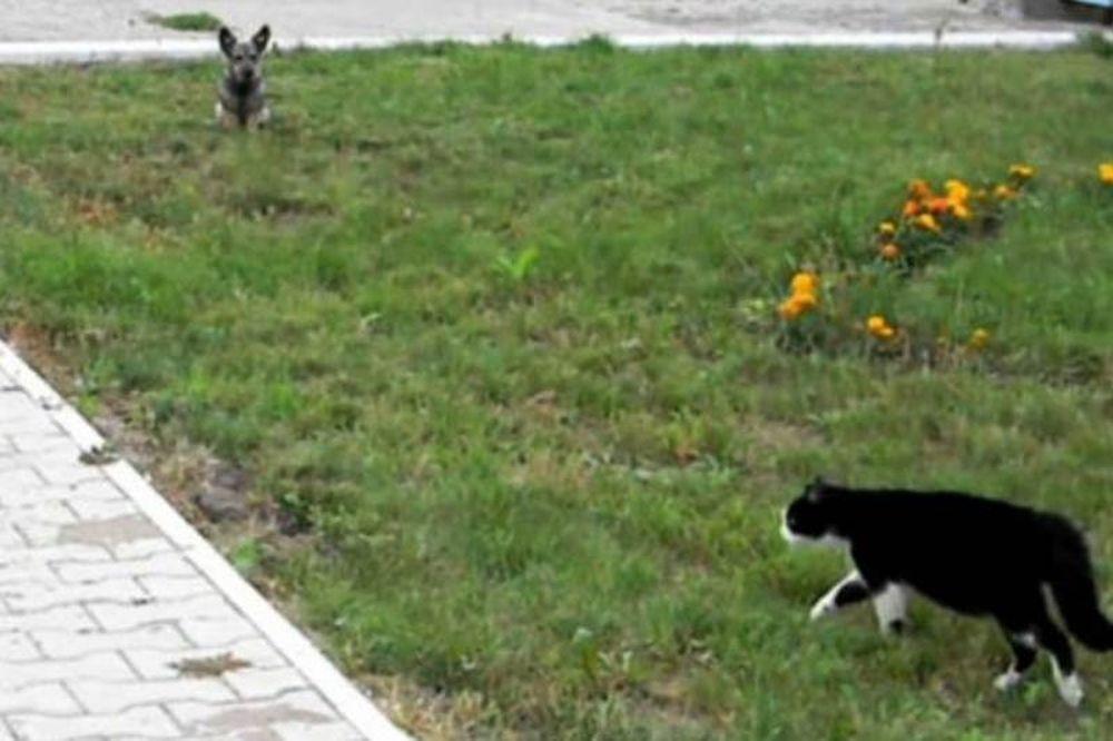 Επική μονομαχία σκύλου και γάτας (video)