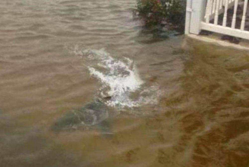 ΑΠΙΣΤΕΥΤΟ: Έφερε και καρχαρίες στη στεριά ο τυφώνας Σάντι!