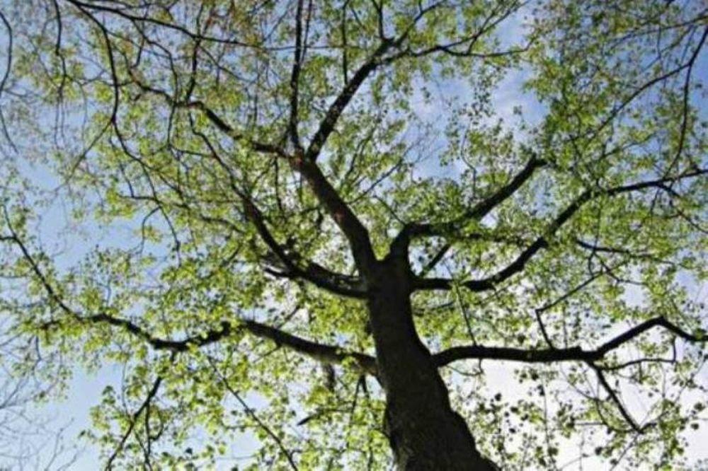 ΦΩΤΟΓΡΑΦΙΑ – ΣΟΚ στην Ηλεία: Κρέμασε σκύλο σε δέντρο