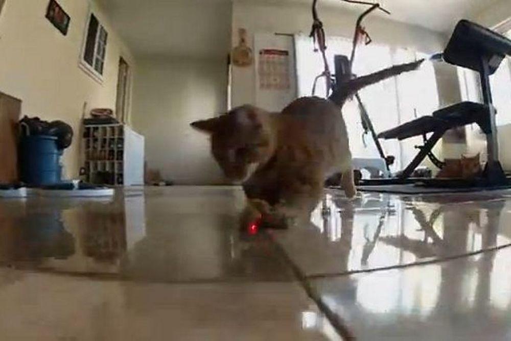 Γάτες εναντίον λέιζερ: H… τελική αναμέτρηση (video)