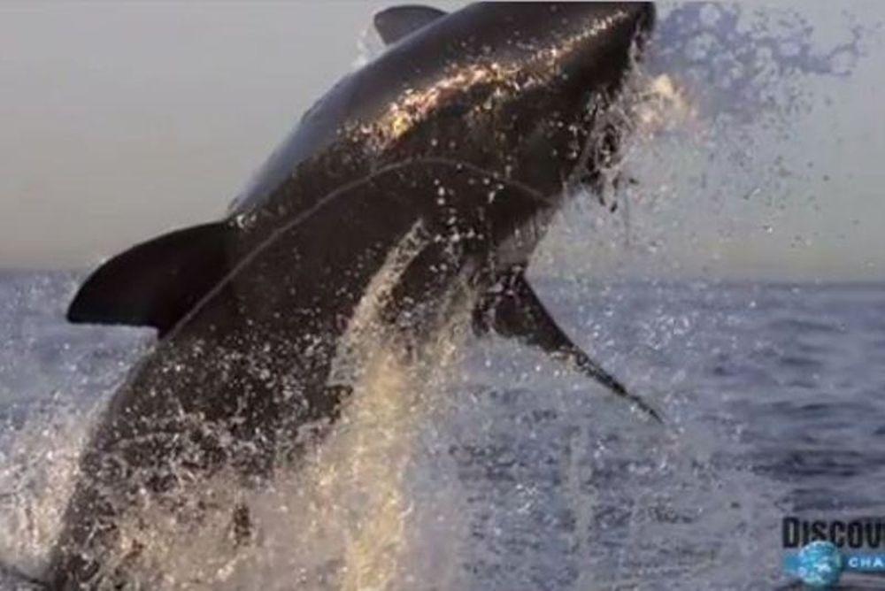 Συγκλονιστικό: Δείτε σε slow motion την επίθεση καρχαρία (video)