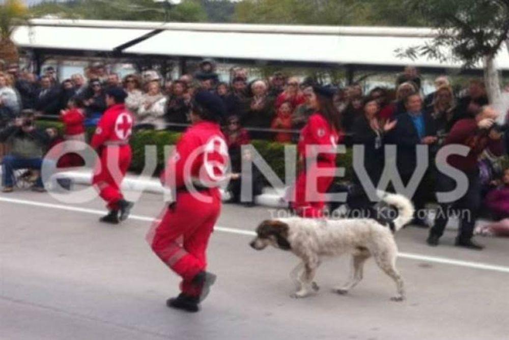 Χαλκίδα: Έκανε παρέλαση και ο σκύλος!
