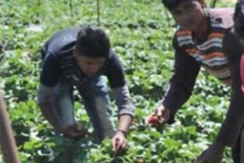 Συγκέντρωση συμπαράστασης στους εργάτες της Μανωλάδας