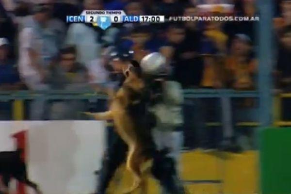 Αργεντινή: Σκύλος κάνει κεφαλιά! (video)