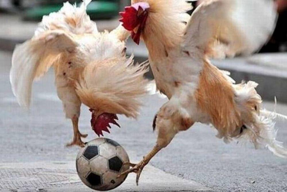 Ποδόσφαιρο, θυσίες και ζώα! (photos+videos)