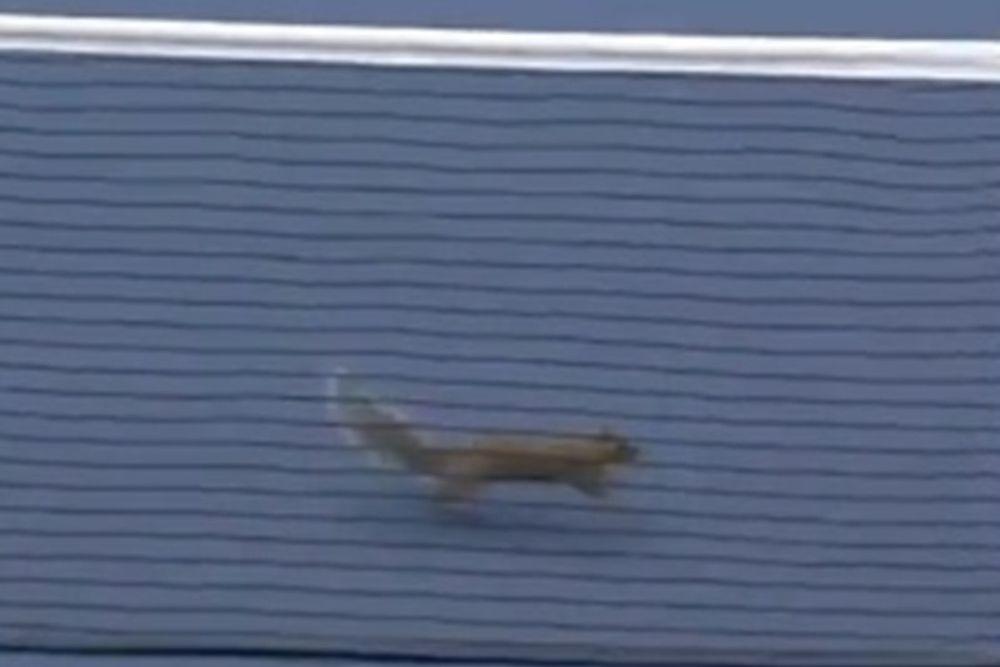 US Open: Ο σκίουρος ξαναχτύπησε! (videos)
