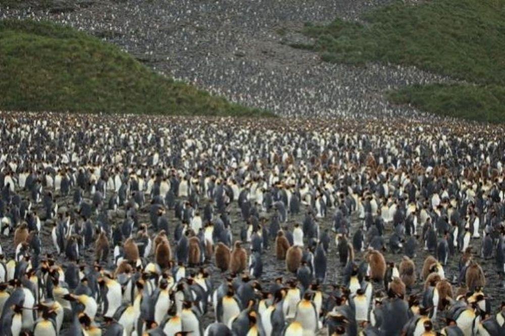 Ο μεγαλύτερος «βρεφικός σταθμός» στον κόσμο ανήκει στους... πιγκουίνους! (εικόνες)
