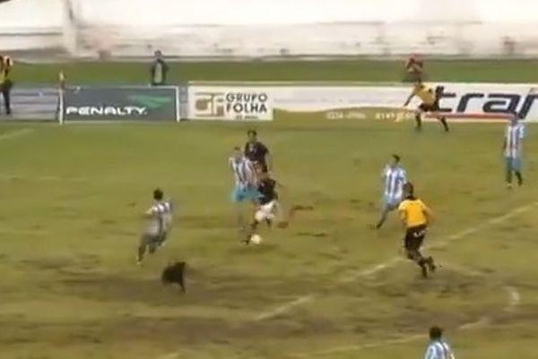 Βραζιλία: Σκύλος πήγε να βάλει γκολ! (video)