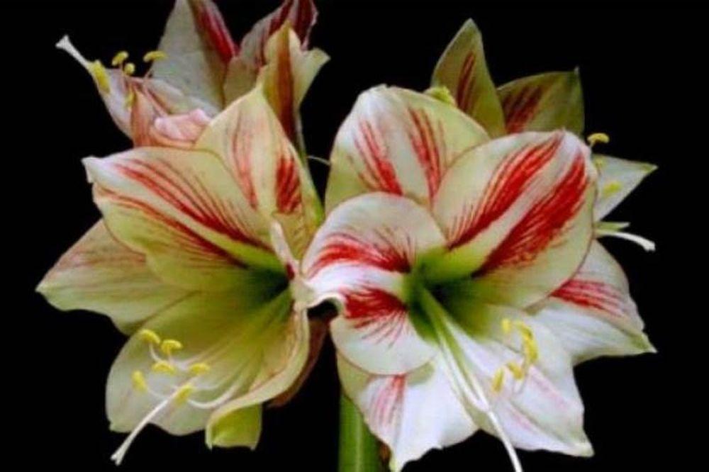 Λουλούδια ανθίζουν σε γρήγορη κίνηση! (pics)