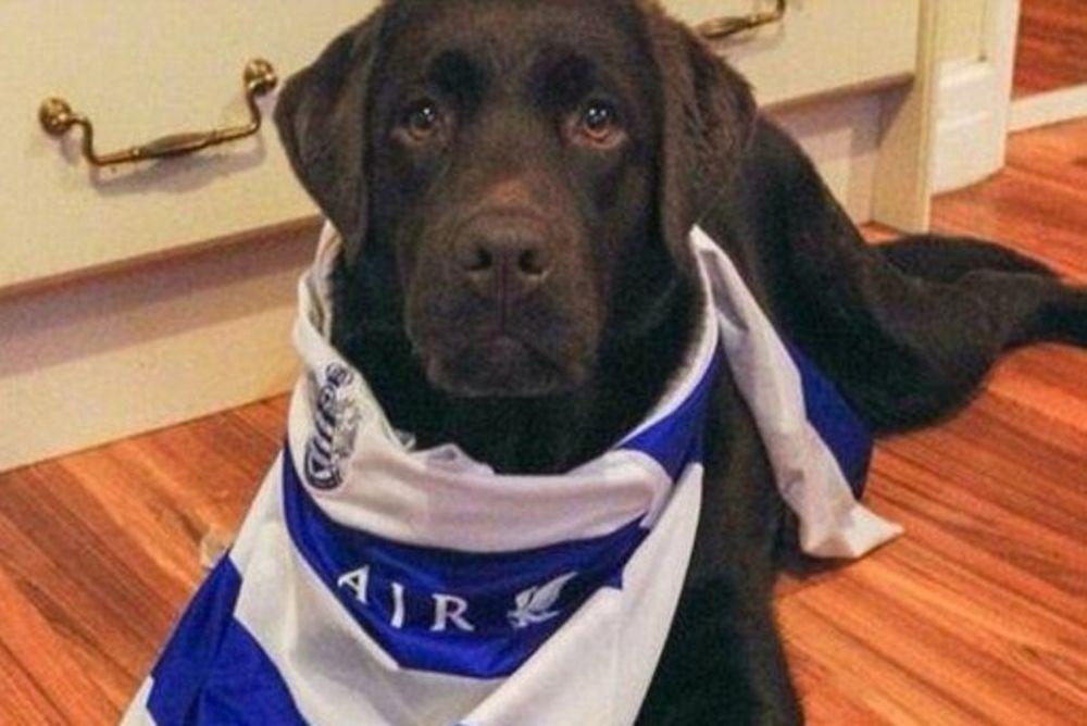 ΚΠΡ: Σκύλος έφαγε τα εισιτήρια οπαδού (photos)