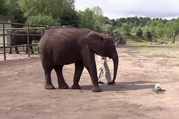 Παγκόσμιο Κύπελλο Ποδοσφαίρου - Προημιτελικά: Ελεφαντίνα βλέπει Γερμανία (video)