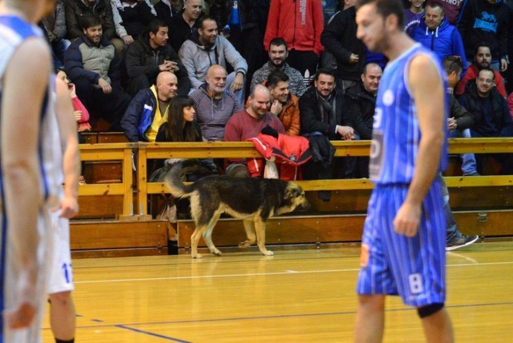 ΕΣΚΑΚ: Σκύλος διέκοψε αγώνα (photos)