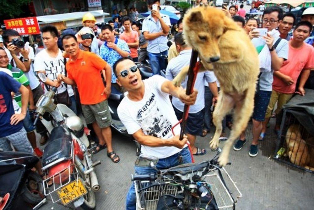 Το αποτρόπαιο έθιμο της Κίνας με τη σφαγή ζώων! (photos)