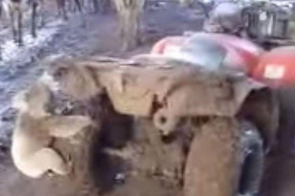 Πρωτοφανές: Κοάλα παίρνει στο κυνήγι αγρότη για να… (video)