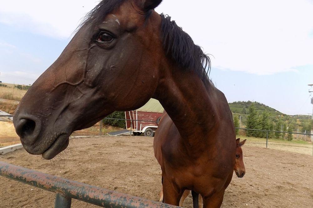 Ο, τι δεν ξέρετε για τα άλογα! (photos&video)