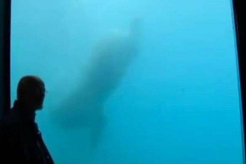 Τρόμος στο ενυδρείο: Πολική αρκούδα έσπασε το προστατευτικό τζάμι πετώντας… βράχο! (video)