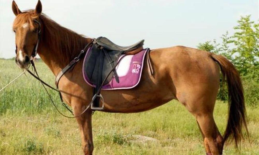 Ατύχημα με άλογο στα Χανιά - Στο νοσοκομείο 35χρονος
