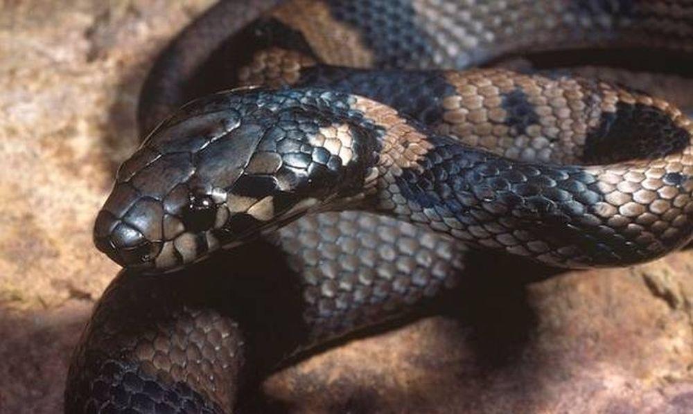 Η απόλυτη ανωμαλία: Διέρρευσε βίντεο που έκανε σεξ με… φίδι! (photos)