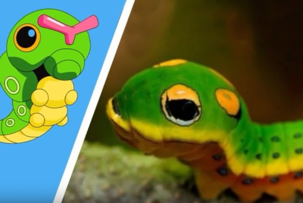 Εντεκα από τα Pokemon, υπάρχουν και στην πραγματική ζωή... (video)