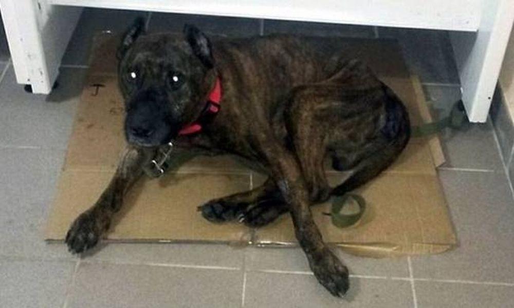 Φρίκη: Βίαζε το σκύλο του σε πάρκο επί 8 χρόνια – Δείτε την αντίδρασή του όταν τον ελευθέρωσαν (vid)