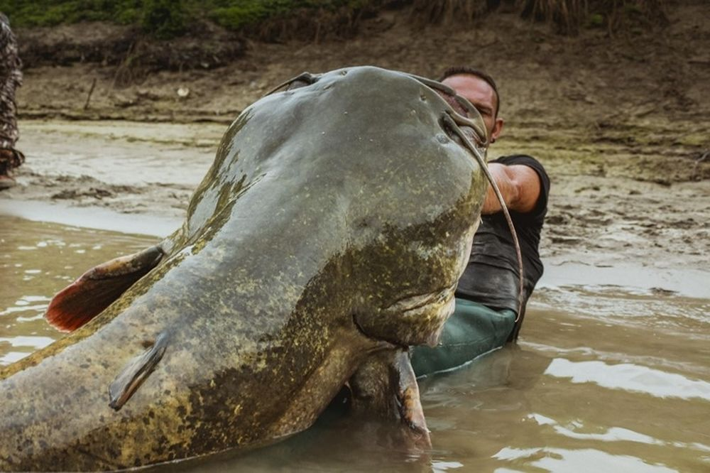 Πήγε για ψάρεμα αλλά του… κόπηκε το αίμα μ' αυτό που έπιασε! (videο)