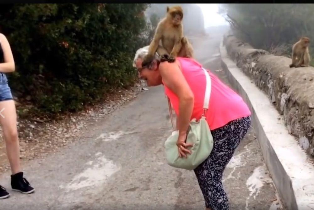 Πίθηκοι μαλώνουν πάνω σε τουρίστρια! (video)