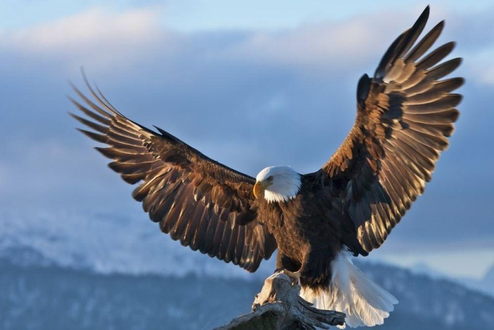 Σε αναζήτηση... αετών ο ΠΑΟΚ