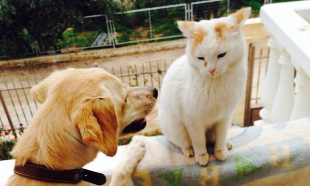 Η γάτα που έκανε το σκύλο... γιο-γιο! (vid)