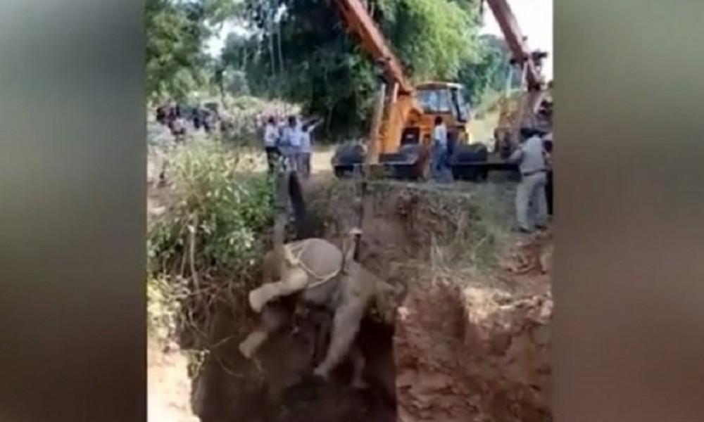 Συγκλονιστικό: Η διάσωση του παγιδευμένου ελέφαντα (vid)
