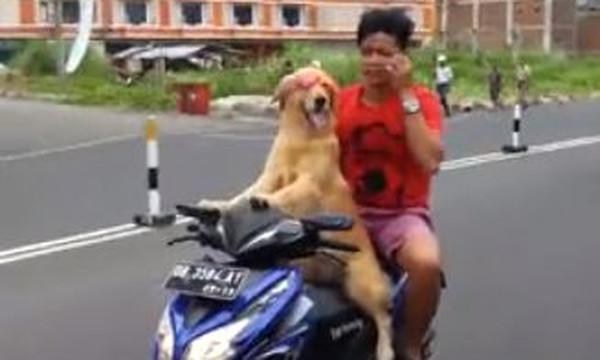 Βίντεο - έπος: Ο σκύλος… easy rider που οδηγά μηχανάκι!