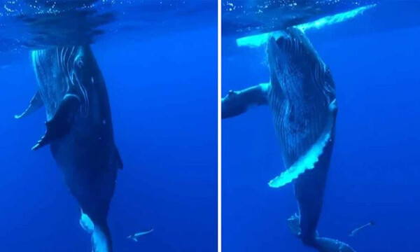 Έκανε βουτιά πάνω σε μια φάλαινα. Δεν θα πιστεύετε τη συνέχεια