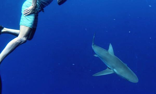 Θα σου κόψει την ανάσα: Πρώην σταρ του ΝΒΑ κολυμπάει με καρχαρία! (photο)