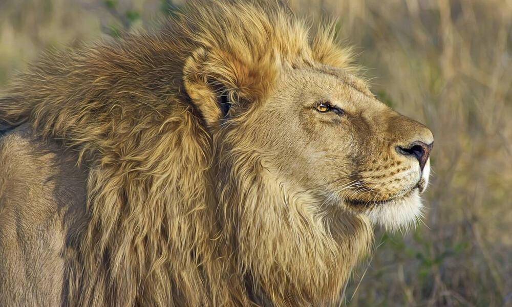Σάλος με το ζευγάρι κυνηγών που φιλήθηκε πάνω από νεκρό λιοντάρι που μόλις είχαν σκοτώσει (photo)