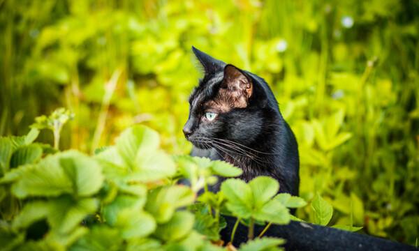 Γάτα ρίσκαρε τη ζωή της για να σώσει τα γατάκια της από επίθεση σκύλου (vid)