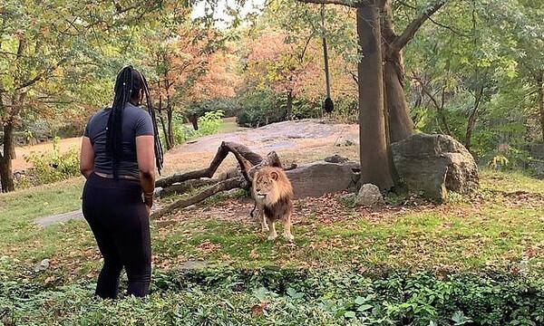 Γυναίκα μπαίνει στο κλουβί λιονταριού και...