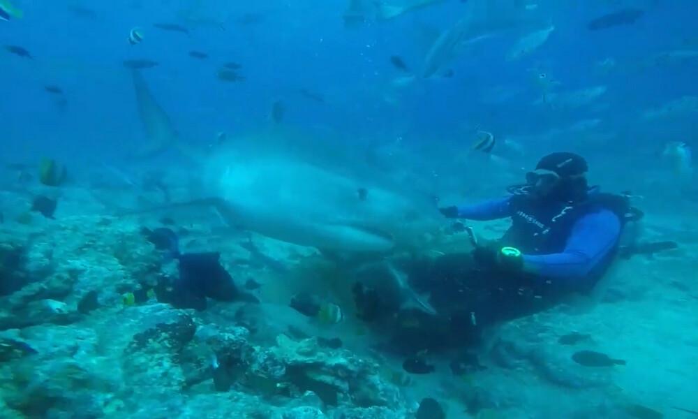 Εικόνες που κόβουν την ανάσα - Τεράστιος καρχαρίας δάγκωσε στο κεφάλι δύτη (videos)