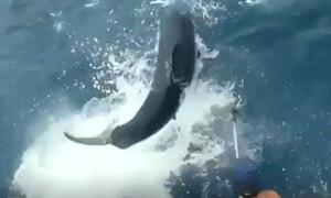 Πίστευαν πως ψάρεψαν τεράστιο τόνο, μέχρι που έσκασε μπροστα τους ένας... (video)