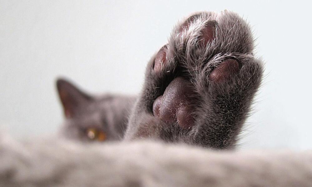 Δείτε την πιο «θλιμμένη» γάτα στον κόσμο (photos)