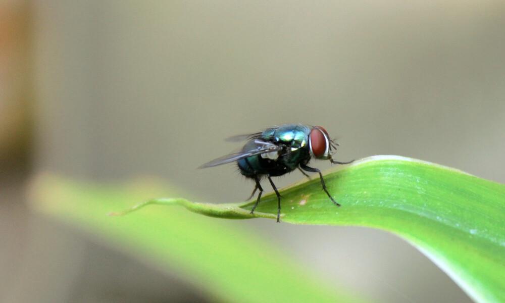 Δείτε τι συμβαίνει όταν ακουμπήσει μύγα το φαγητό σας; (pics)