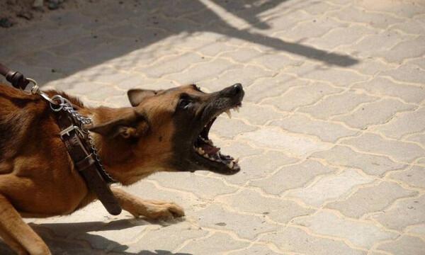 Αγοράκι παραμορφώθηκε στο πρόσωπο για να σώσει την αδελφή του από σκύλο (Σκληρές Εικόνες)