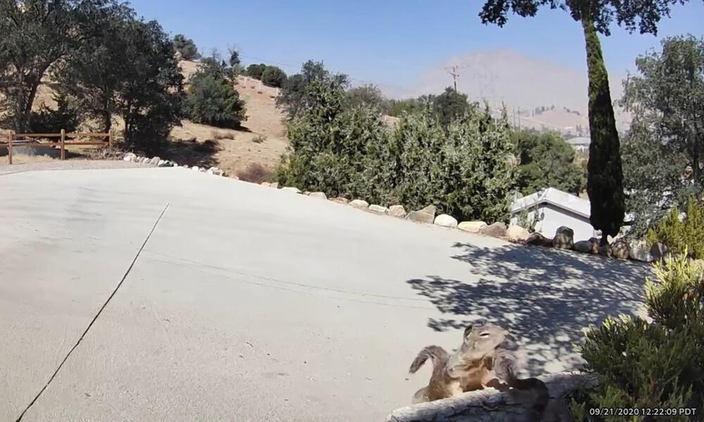 Κροταλίας πάει να τσιμπήσει σκίουρο - Η τρομερή αντίδρασή του (photos+video)