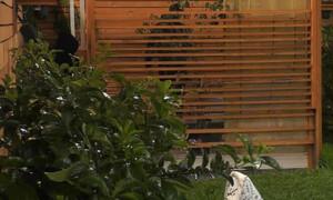 Big Brother: Το φιλί του Δημήτρη Κεχαγιά με τη Σοφία Δανέζη (video)
