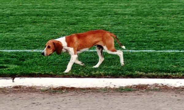 Ο σκύλος που φέρνει... γούρι στον Ηρακλή Ψαχνών (video)