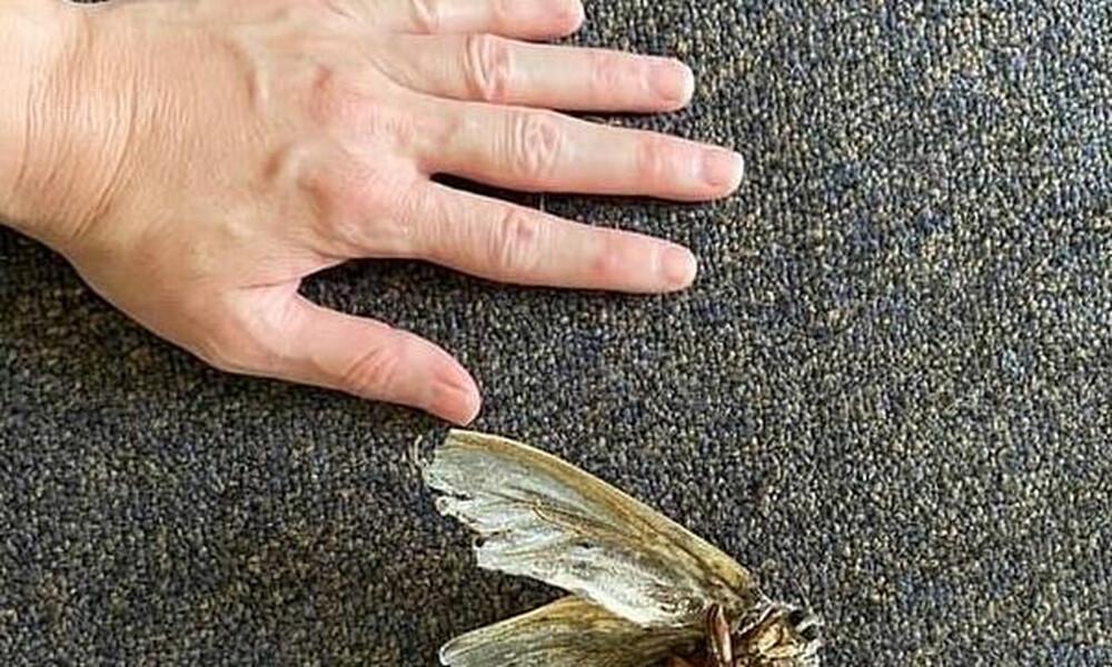 Καθάριζε το σπίτι και είδε με τρόμο ένα φτερωτό, τεράστιο πλάσμα - Τι είναι;