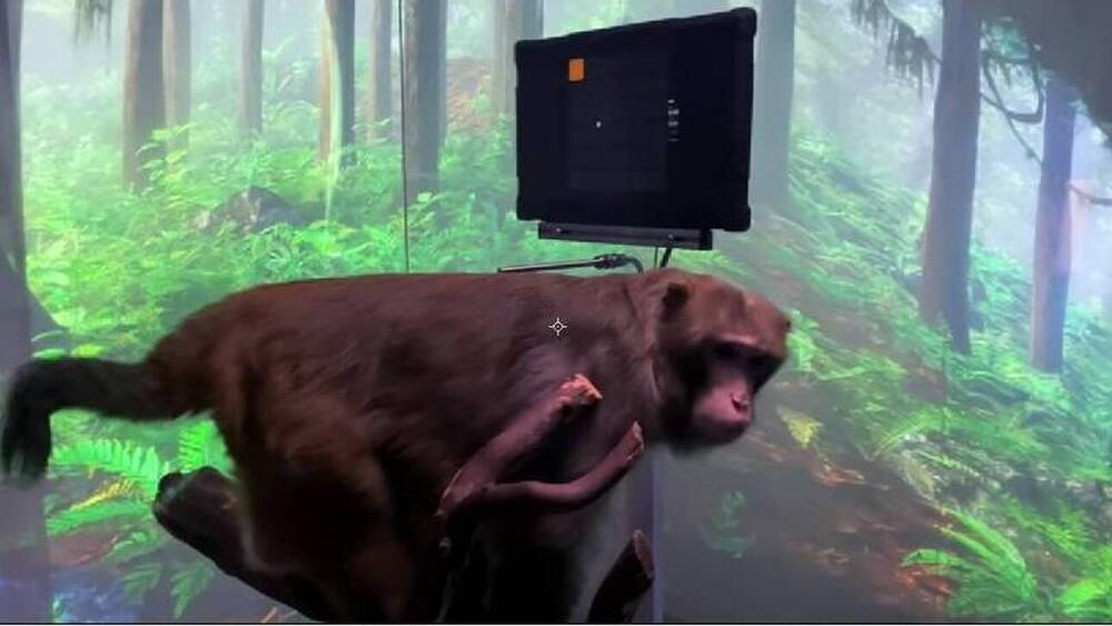 Τεχνολογική επανάσταση: Μαϊμού παίζει βιντεοπαιχνίδι με τη σκέψη