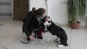 Τι αλλάζει με το νέο νομοσχέδιο για τα ζώα συντροφιάς και τα αδέσποτα
