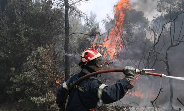 Φωτιά ΤΩΡΑ: Βίντεο ντοκουμέντο από το Αλεποχώρι – Καίγονται σπίτια, δραματικές στιγμές